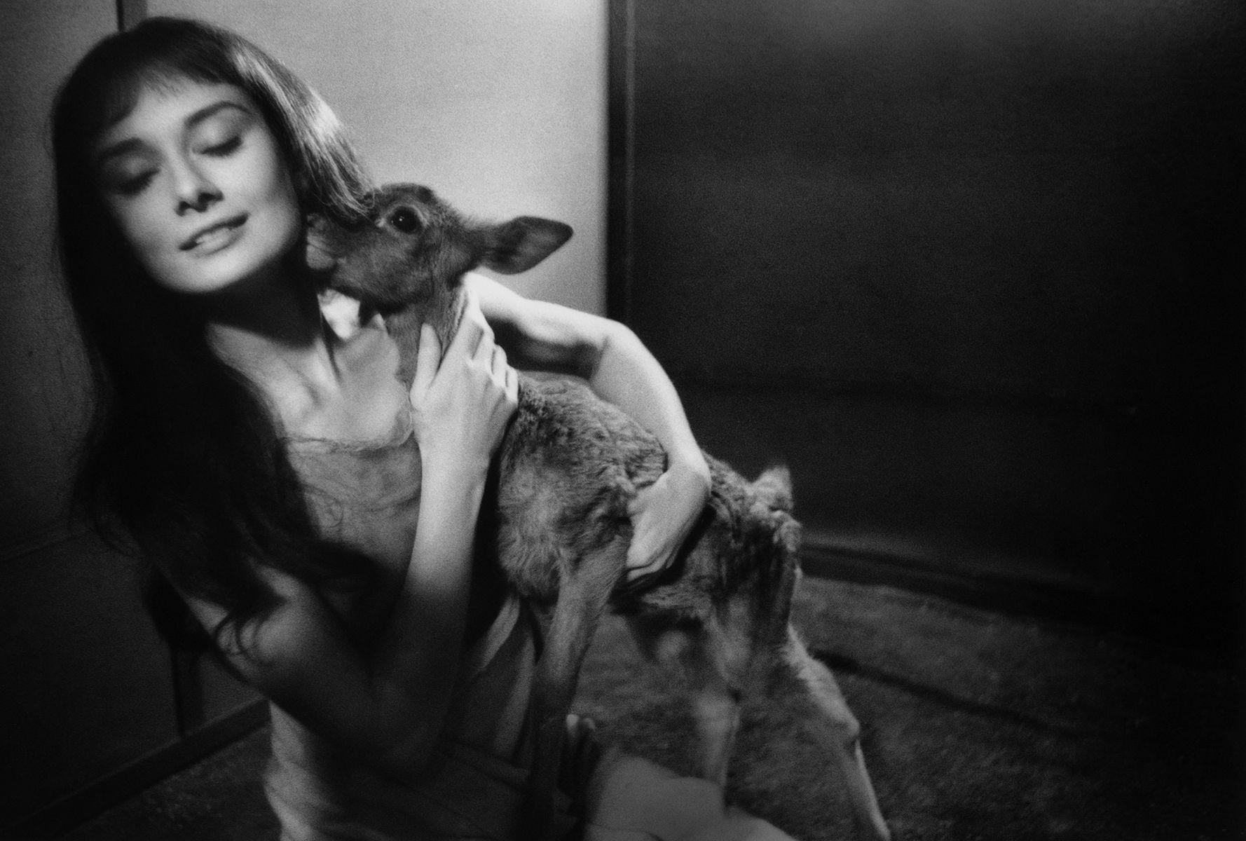 Audrey Hepburn,  Deer