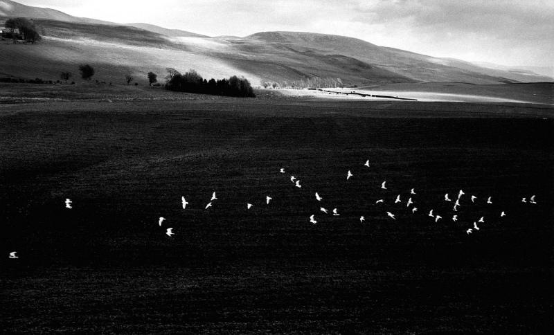 Scottish landscape with birds, 1957.